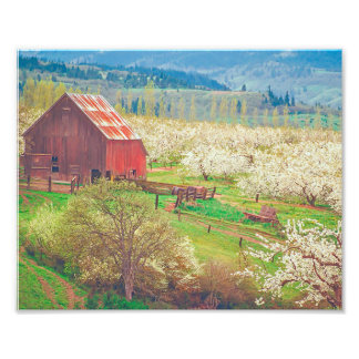 Barn With Cherry Blossoms - Season of Blooms Art Photo