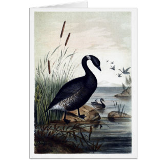 Barnacla negro tarjeta de felicitación