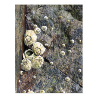 Barnacle buddies postcard