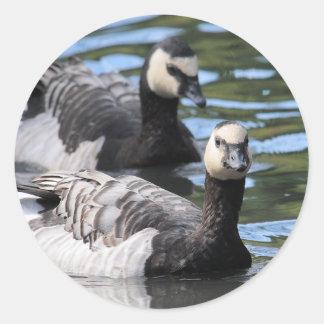 Barnacle Duet Classic Round Sticker