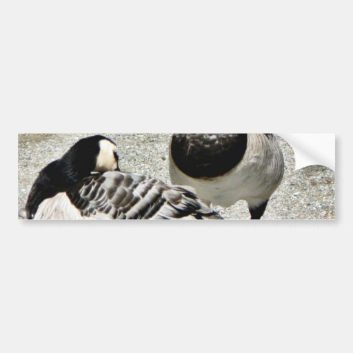 Barnacle Geese Bumper Sticker