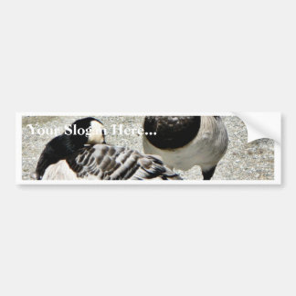 Barnacle Geese Bumper Stickers