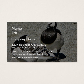 Barnacle Geese Business Card