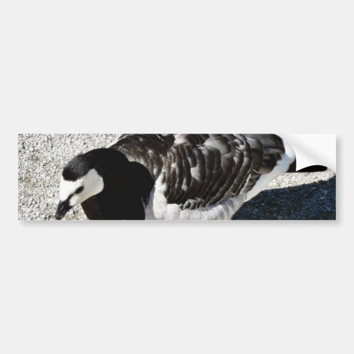 Barnacle Goose Animal Bumper Stickers