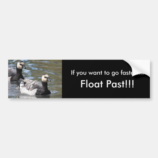 Barnacle Goose Bumper Sticker