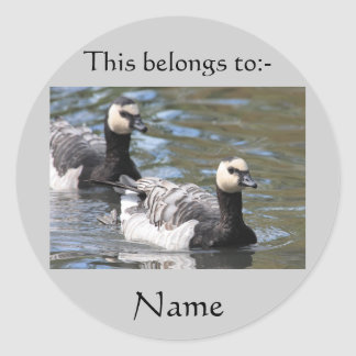 Barnacle Goose Classic Round Sticker