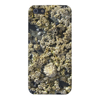 Barnacle iPhone SE/5/5s Case