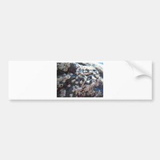 Barnacles 1 bumper sticker