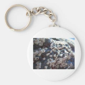 Barnacles 1 keychain