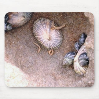 Barnacles and Shells Mouse Pad