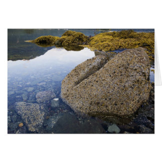 Barnacles and Sky, Funter Bay, Alaska Card
