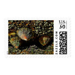 Barnacles in Quiberon, France Postage