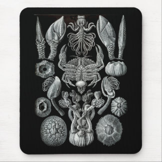Barnacles Mouse Pad