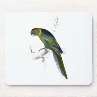 Barnard's Parrakeet by Edward Lear Mouse Pad