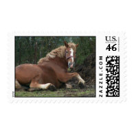 Barney the Belgian Stamps