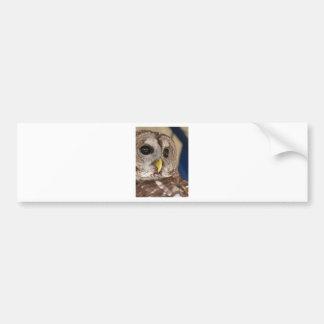 Barney the Owl Bumper Sticker