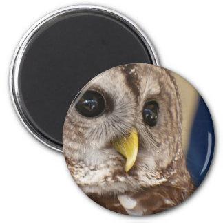 Barney the Owl Magnet