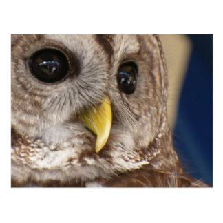 Barney the Owl Post Card