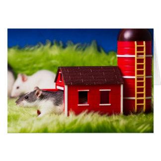 Barnhouse Rat Card
