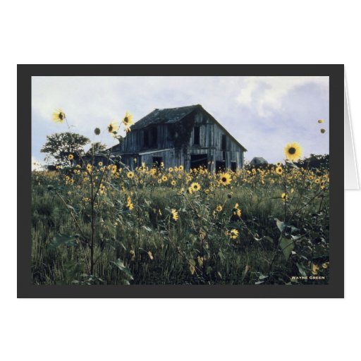 Barns and Sunflowers Greeting Card