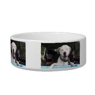 Barnsey Staffy Pet Bowl
