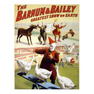 Barnum y Bailey - gansos de ejecución maravillosos Tarjeta Postal