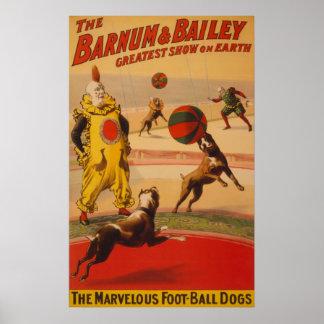 Barnum y Bailey - perros maravillosos del fútbol Posters