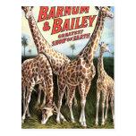 Barnum y teatro retro de las jirafas de Bailey Tarjetas Postales