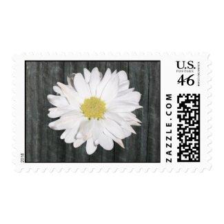 Barnwood & Daisy Postage Stamp stamp