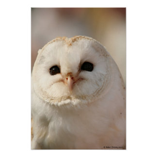 Barny the Barn owl Poster