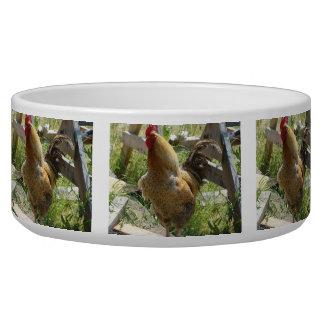 Barnyard Chicken Bowl