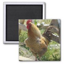 Barnyard Chicken Magnet