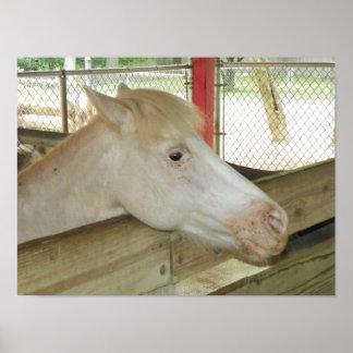 barnyard pony poster