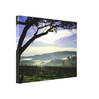 Barossa Sunrise Landscape Canvas Print