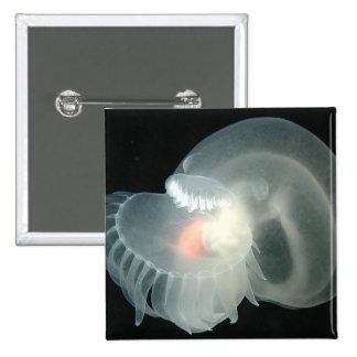 Barra de mar transparente pins