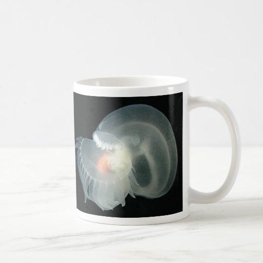 Barra de mar transparente tazas de café