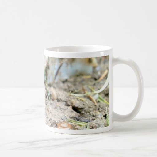 Barra y caracol taza de café