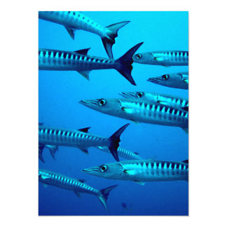 barracuda dive deep sea ocean water tropical wave card