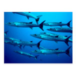 barracuda dive deep sea ocean water tropical wave postcard