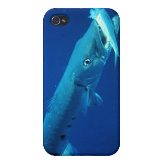 Barracuda eating its prey covers for iPhone 4