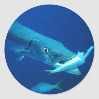 Barracuda eating its prey round stickers