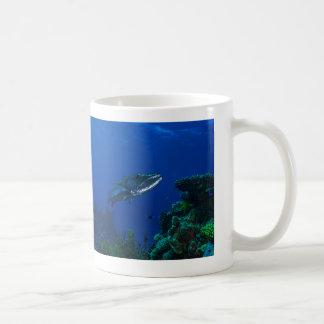 Barracuda en la taza de café de la gran barrera de