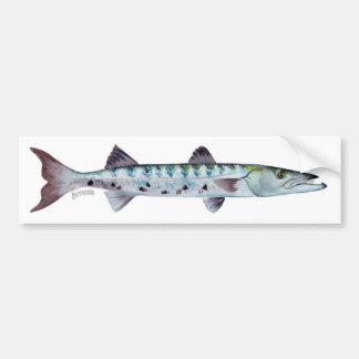 Barracuda fish bumper sticker