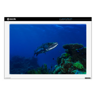 Barracuda Great Barrier Reef Coral Sea Decals For Laptops