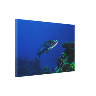 """""""Barracuda on the Great Barrier Reef"""" Canvas Print"""