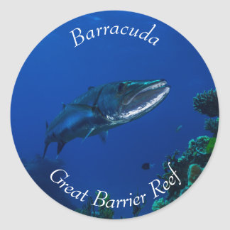 Barracuda on the Great Barrier Reef Classic Round Sticker