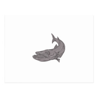 Barracuda Swimming Down Drawing Postcard