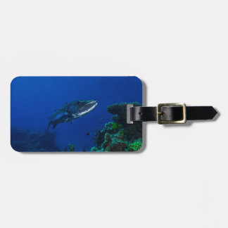 Barracuda the Great Barrier Reef Luggage Tag