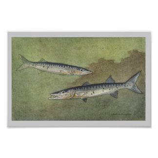 Barracuda Vintage Fish Print Photo Print