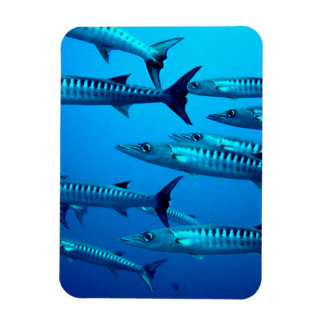 Barracudas Rectangular Photo Magnet